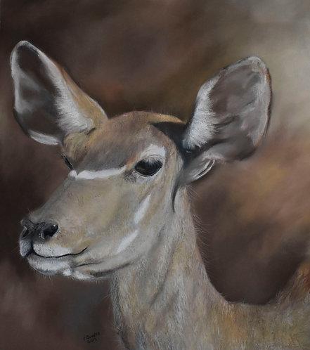 "Female Kudu - 26""x23"" Framed"