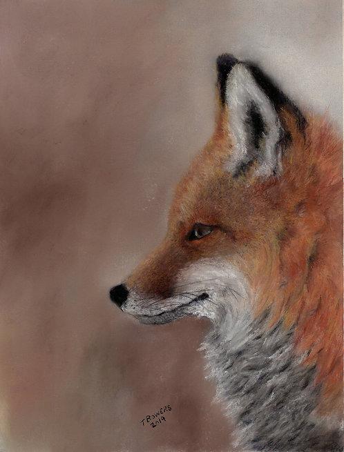 Freddie Fox (Framed) 11x14