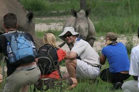 Meeting rhinos on safari