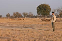 Tracking Cecil's pride Hwange National Park