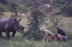 Rhino observation