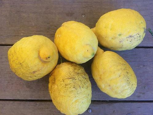 Limoni bio siciliani 5 kg