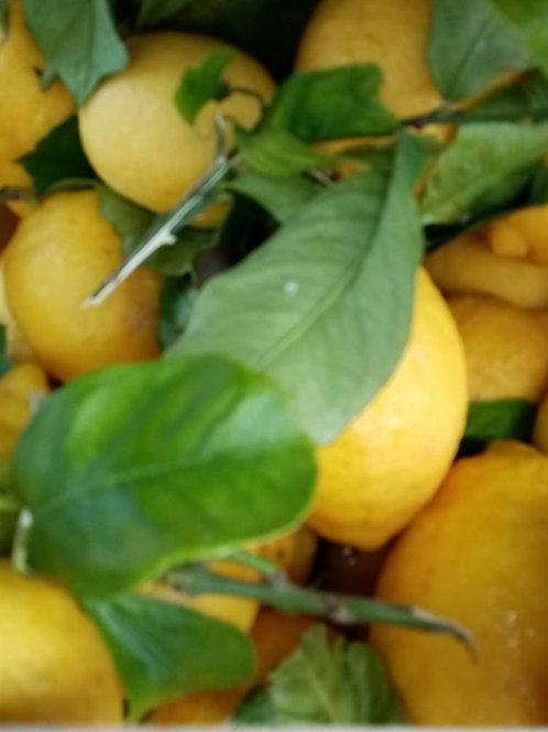 1kg Limoni siciliani nostrani