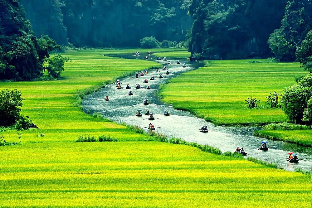 Rice Fields image