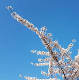 Frühlingsbaum.jpg