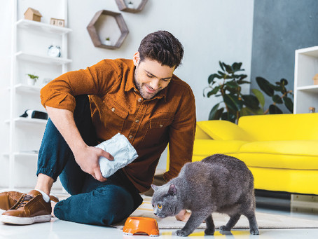 What to Feed a Senior Cat