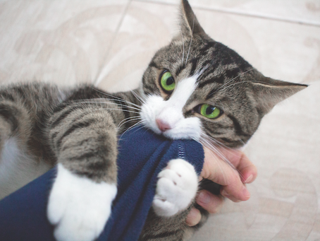 Your Cat's Weird Behaviors Explained