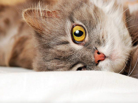 Tips for the First 30 Days of Cat Adoption