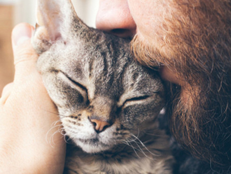 What are the Best Hypoallergenic Cat Breeds for People with Allergies?