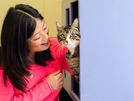 Are You Allergic to Your Pet?