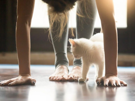 Why Cats And Yoga Make A Perfect Pair