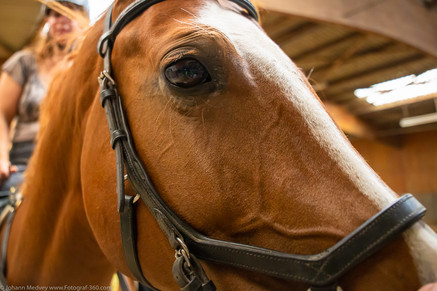 Jasmin`s Lieblingspferd
