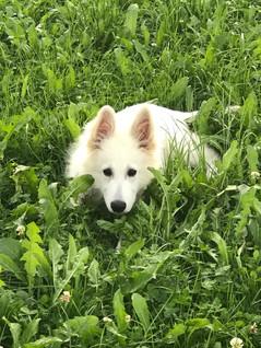 Antar im Gras
