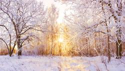 Winterwald.jpeg