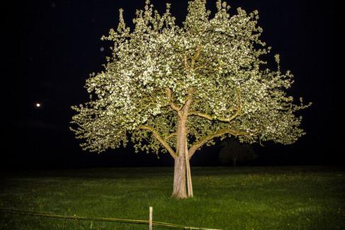 Baum bei Nacht