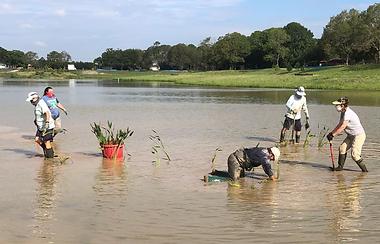 2020_Wetland_Planting.png