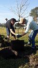 TreePlanting13.jpg