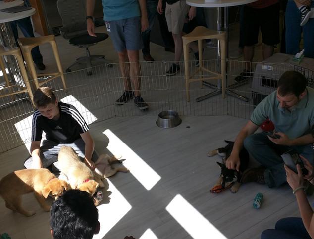 Puppy Party 6.jpg
