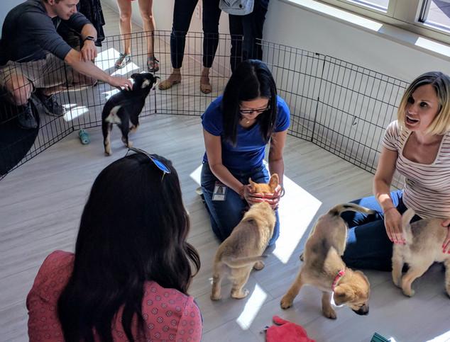 Puppy Party 5.jpg