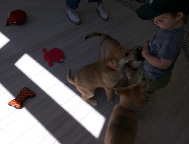 Puppy Party 7.jpg