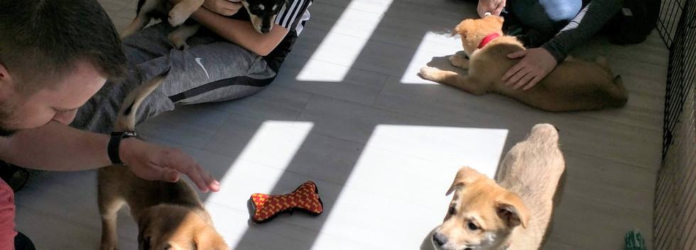 Puppy Party 8.jpg