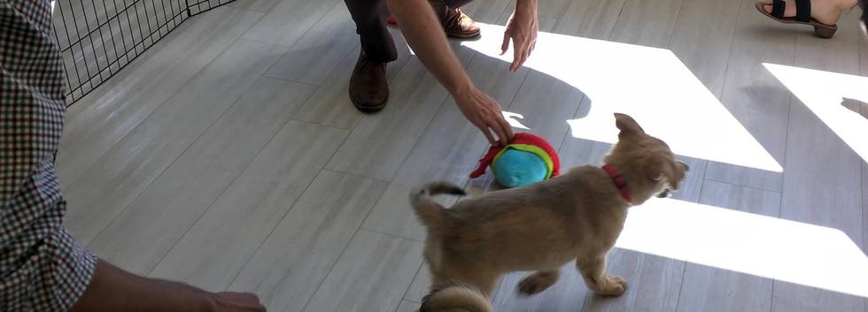 Puppy Party 2.jpg