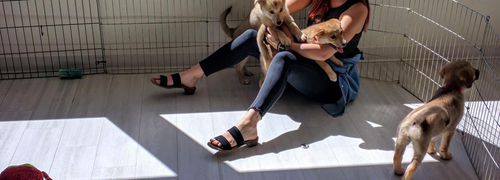 Puppy Party 3.jpg