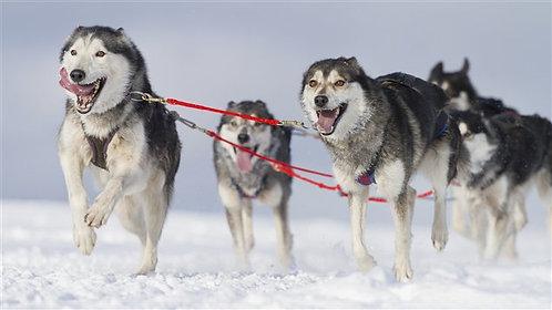 Section Teamdog