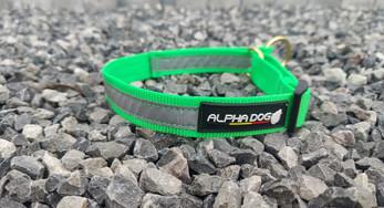 Alphadogsport collier AMAROK BASIC