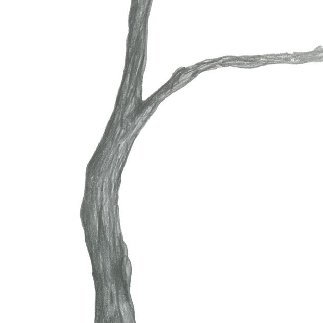 Tree_SA341_SabrinaAsquithArt_8.29.01jpg