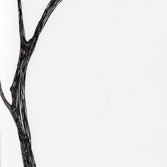 Tree_SA043_SabrinaAsquithArt_2015.jpg
