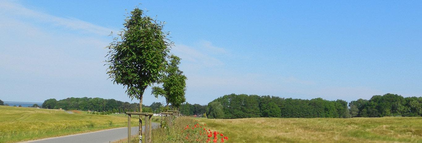 Buchen Sie Ihr günstiges Ferienhaus an der Ostsee