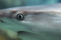 shark-3197574_1920.jpg