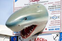 shark-1599353_1920.jpg