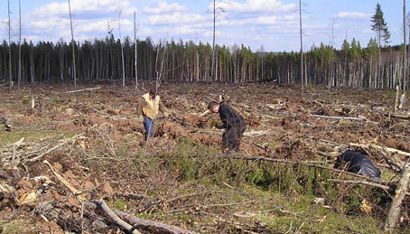 Прокуратура на страже лесов
