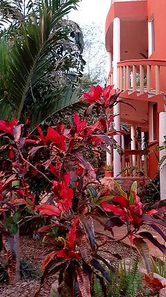 FLORES-ROJAS-EN-HOTEL.jpg