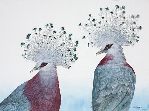 Crowned Pigeon