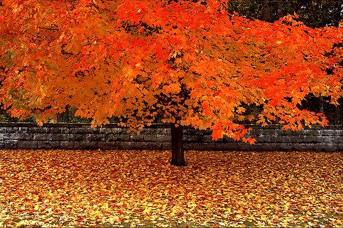 Fall in CT