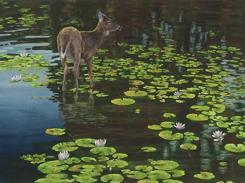 Allen Blagden - Boutiqueart.com Deer-Evening Shallows