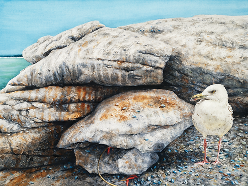 Allen Blagden-Boutiqueartprints.com- Scavenger - Museum Quality Art Prints