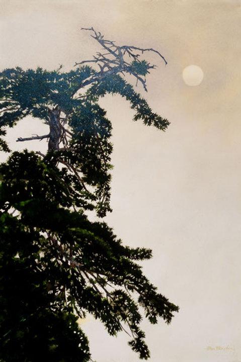 Lone Pine & Misty Moon