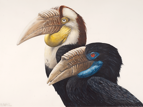 Allen Blagden-Boutiqueartprints.com-Wreathed Hornbills, Bird Prints, Museum Quality Art Prints