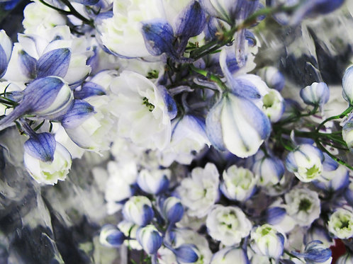 Franco Lacosta boutiqueART boutiqueartprints Flora 3551