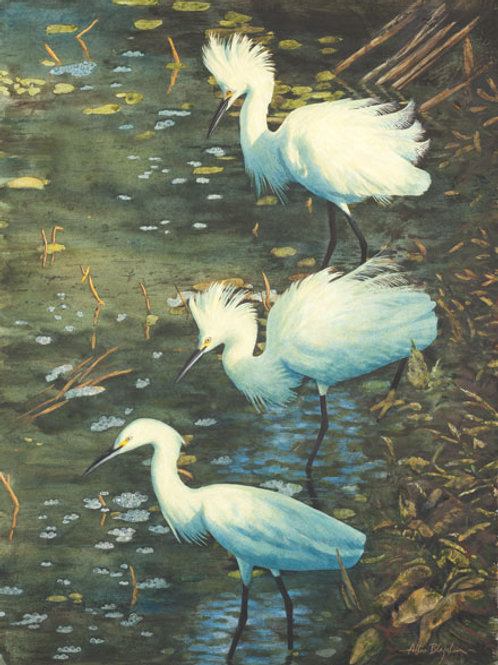 Lunch Break Three Egrets