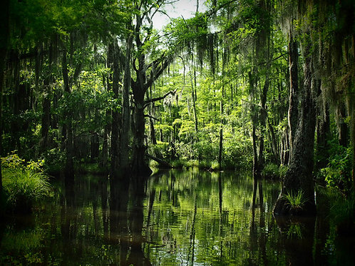 Anne Day |boutiqueart prints|Louisiana Swamp