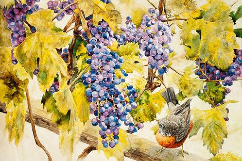 Harvest Robin