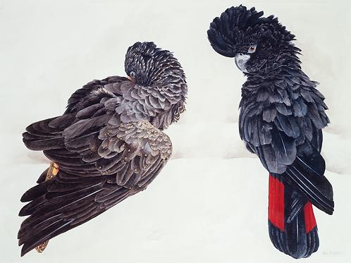 Allen Blagden-Boutiqueartprints.com-Black Cockatoos