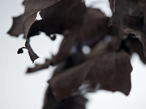 Evan Zelermyer boutiqueart Winter Leaves 5