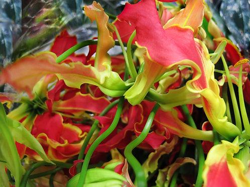 Franco Lacosta|boutiqueART|boutiqueartprints|flora 3346