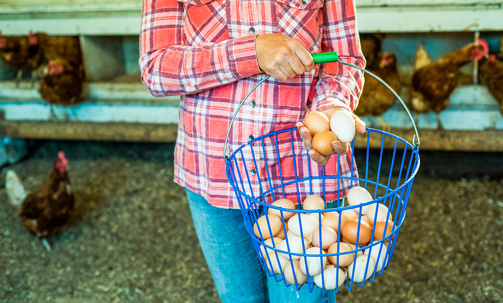 CSA Add-On | Egg Share